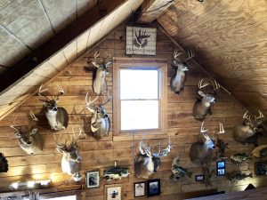 Hunting Junky Trophy Wall