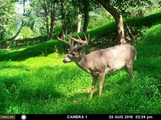 Captain Hook Trail Cam Pic